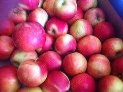 Статистика: свежие фрукты ежедневно ест треть саратовцев