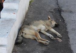 В городе расширят приют для собак