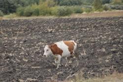 В области застраховано 6,6% сельхозживотных и 2,2% посевов