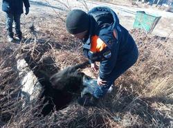 Спасатели вытаскивали лошадь из реки и корову из колодца