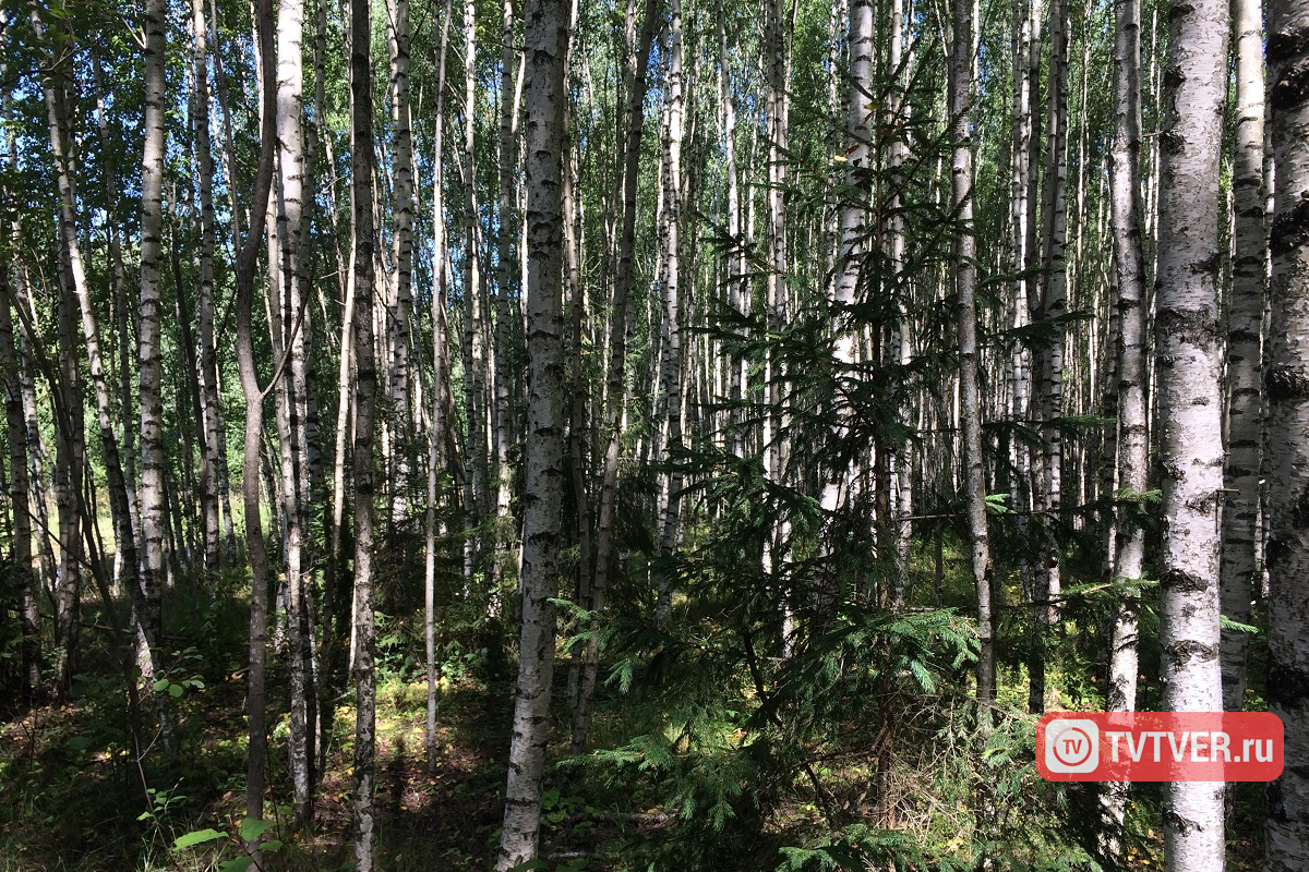 В Тверской области утверждены границы 43 особо охраняемых природных территорий