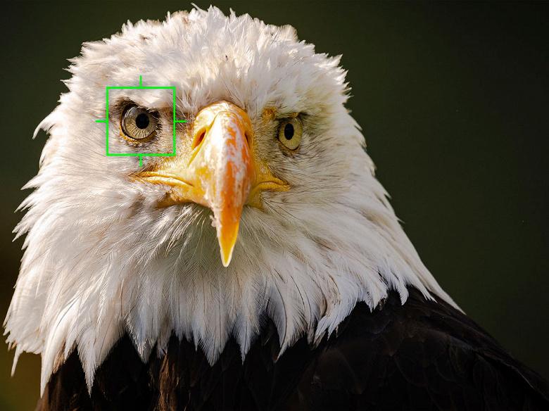 Камеру Olympus OM-D E-M1X научат находить глаз птицы в кадре и фокусироваться по нему