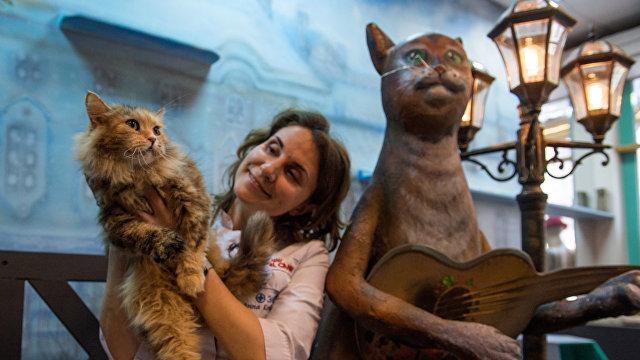 Хуаньцю шибао (Китай): объехать весь мир, чтобы посмотреть на котов