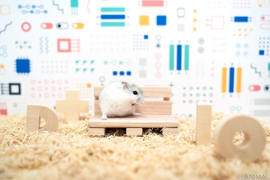 Кажется, ваш питомец загрустил: Panasonic создала «умный дом» для хомяка, который может сделать каждый желающий