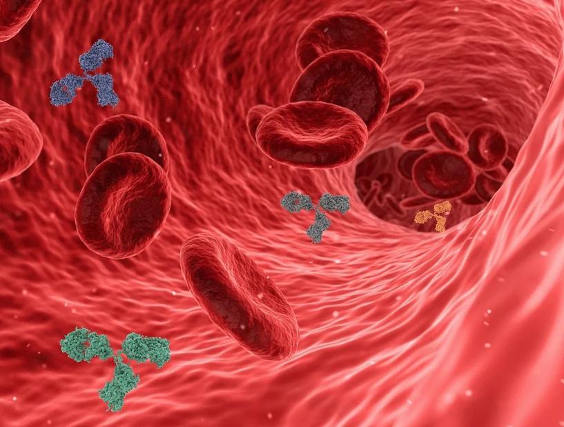 Учёные: Иммунитет у переболевших коронавирусом может сохраняться годами