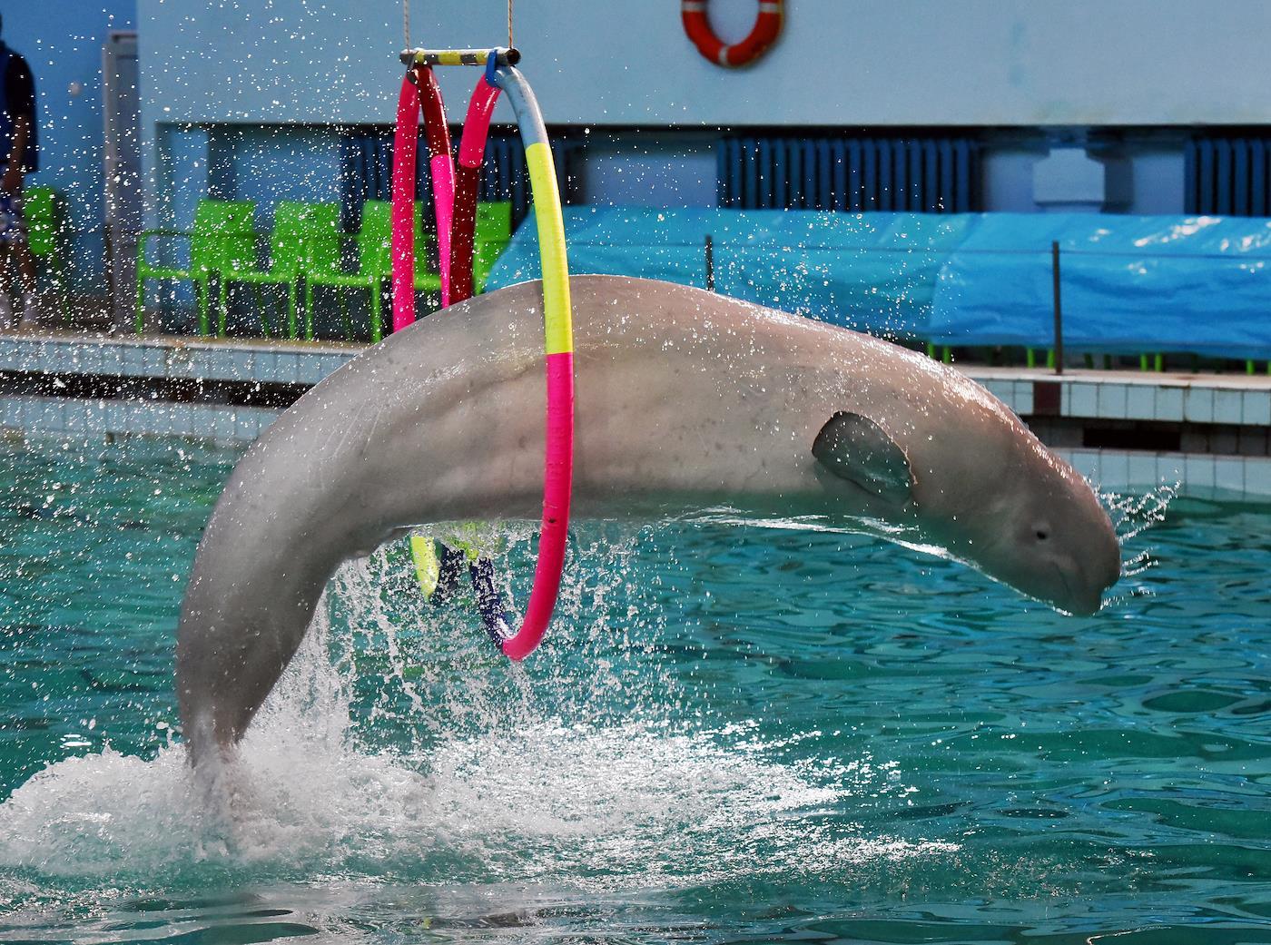 Дельфины тут больше не живут. Собственник здания и земли на Крестовском ищет нового хозяина